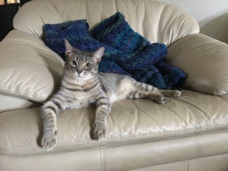 猫がソファでくつろぐ