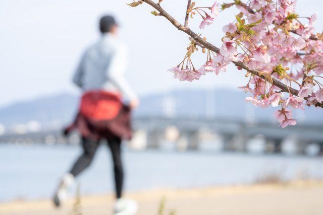 桜とマラソンランナー